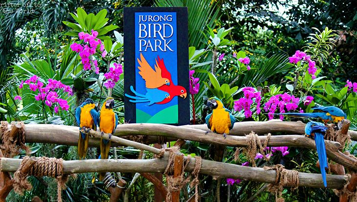 0000326_ve-jurong-bird-park