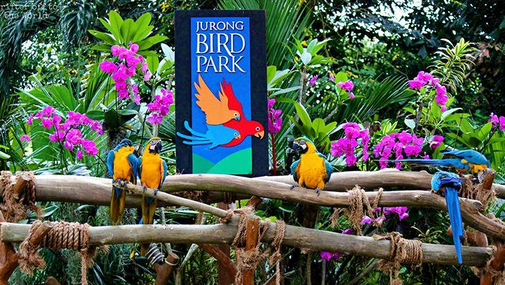 0000326_ve-jurong-bird-park