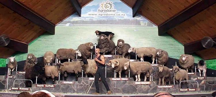 Du lịch New Zealand khám phá văn hóa thổ dân (8 ngày 7 đêm)