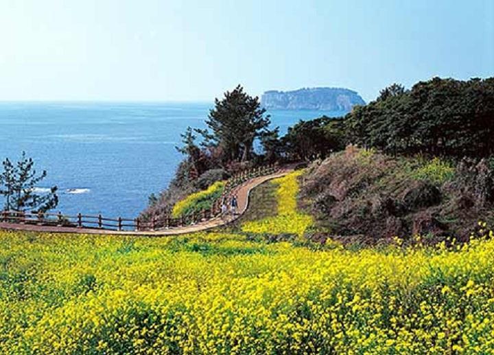 Du lịch Hàn Quốc Tắm mình trong những sắc hoa: Hà Nội- Seoul- đảo Jeju 6N5Đ KH hàng tháng