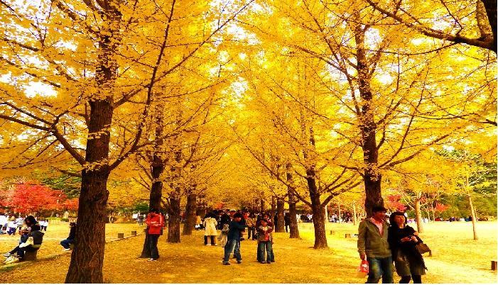 Du lịch  Hàn Quốc 2019 - Mùa Thu Vàng lãng mạn: Seoul – Jeju – Everland - Nami KH 04/08, 02/09, 10/10, 05/11