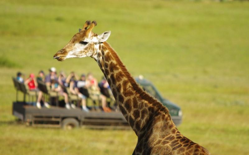 Du lịch châu Phi giá rẻ: Tour Nam Phi- Các tiểu vương quốc Arab thống nhất.