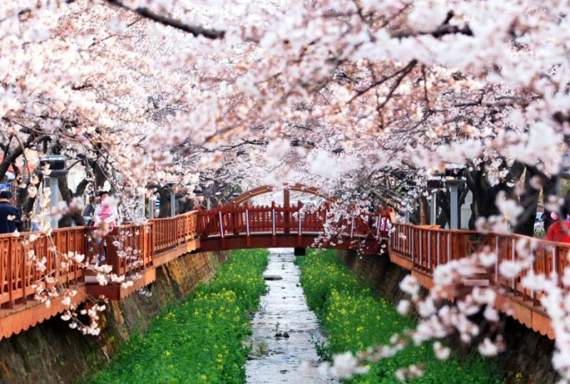 Du Lịch Hàn Quốc :  Seoul - Everland - Đảo Nami 5N4Đ KH hàng tháng