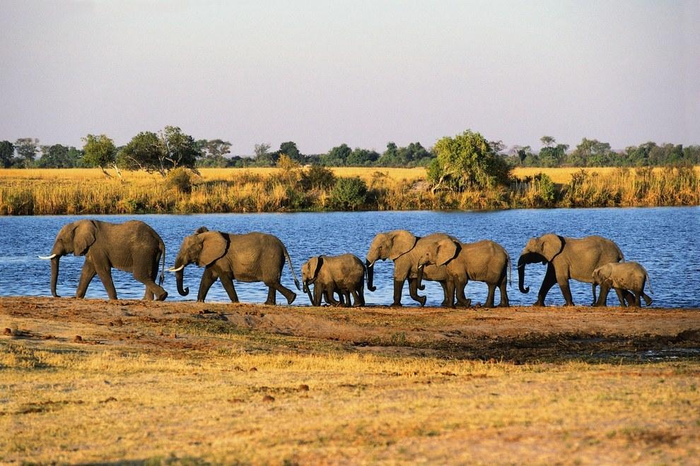 Công viên Quốc gia Chobe Botswana