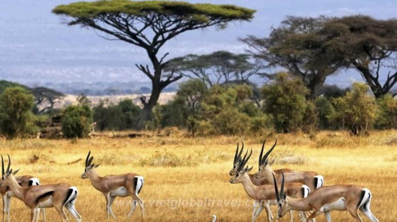 Du-lịch-Kenya-Handetour