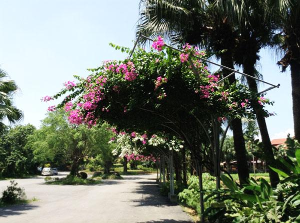 THẢO VIÊN RESORT 2N1Đ