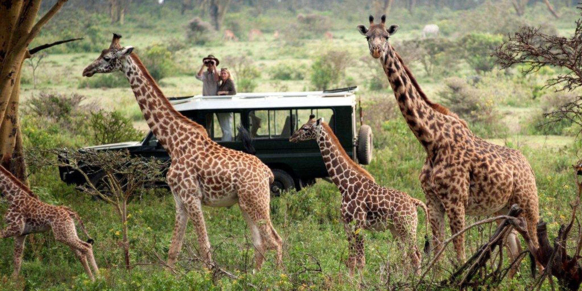 safaris-in-Masai-Mara