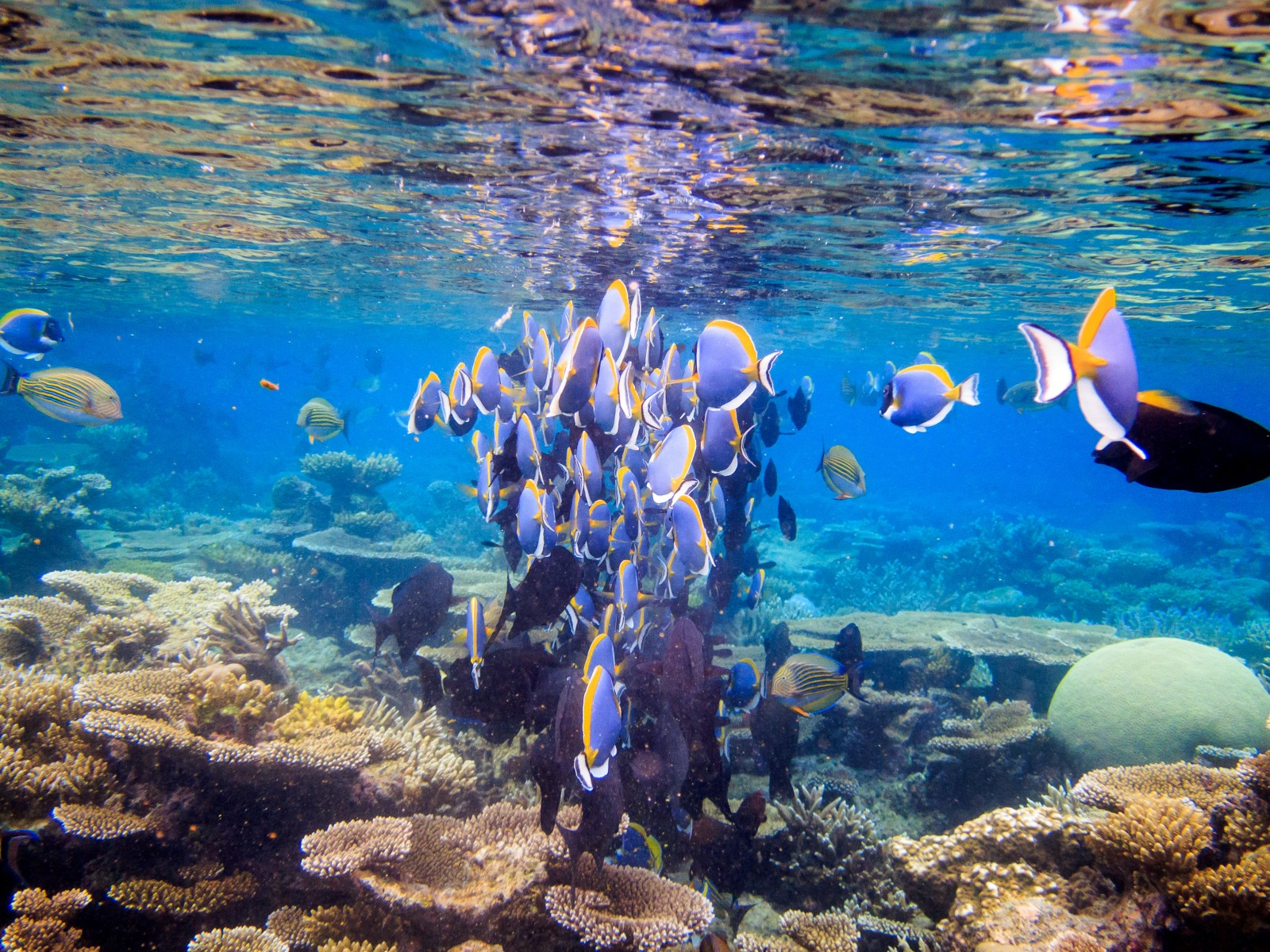 sea_fish_water_swimming_island_underwater_snorkeling_reef-763281