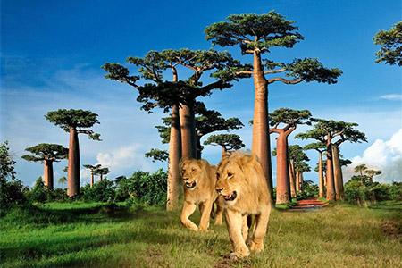 Du Lịch Khám Phá Đảo Madagascar 11N8Đ Kh: 23/12/2020