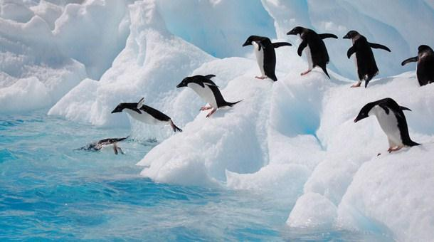Chim cánh cụt Adélie