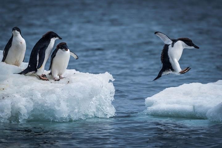 quần đảo Nam Shetland