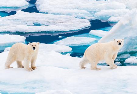 TOUR VIP: Chương trình trải nghiệm Đặc Biệt 2022-Khám phá vẻ đẹp ngoạn mục vùng Bắc Cực 13N/9Đ Kh:18/5/2022